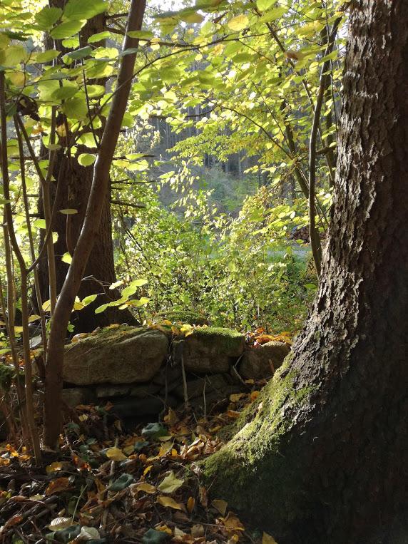 Lemuria Nature Activation